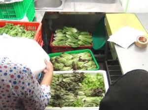 ダラット産の無農薬(オーガニック)野菜を直接手に入れることのできるお店「ヴェジーズ/Veggy's」