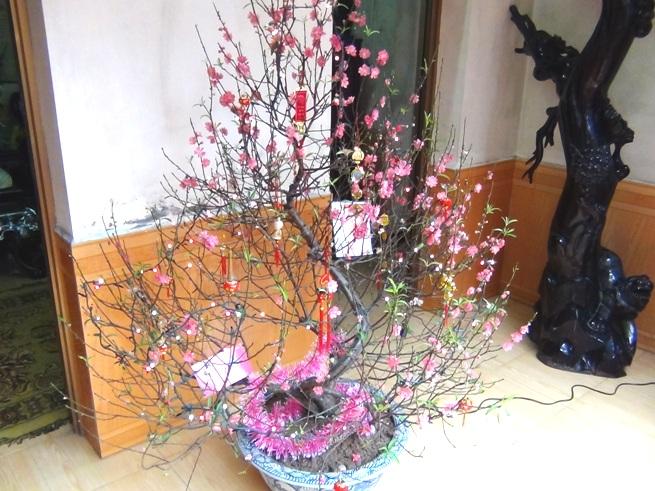 家の縁側にさりげなく置いている桃の木