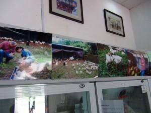 店の至る所に養鶏場を安全に運営している写真が掲げてあります