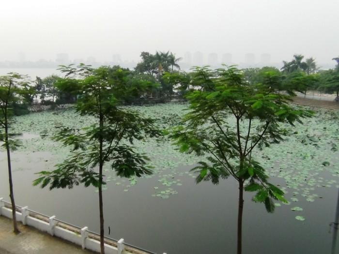 窓から見える北側の風景