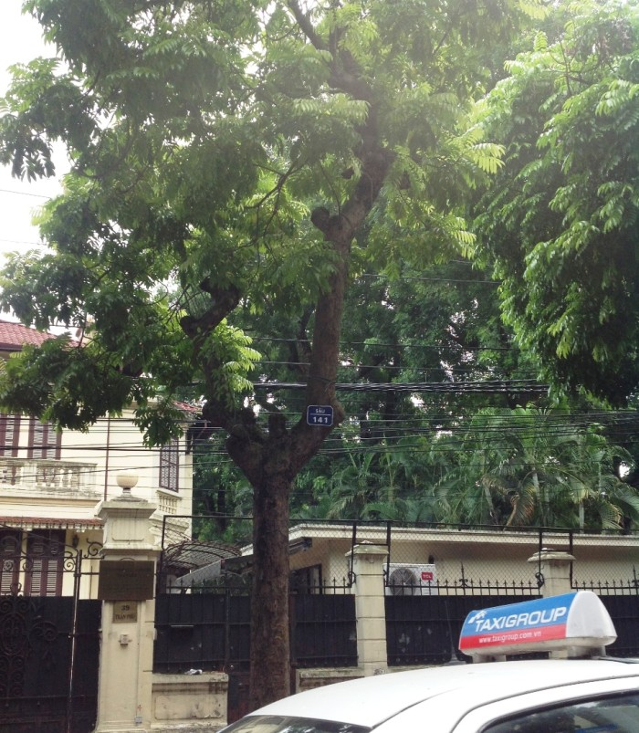 貴重なSauの木の盗難防止のために付けられている木の通し番号札