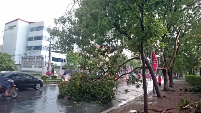 瞬間ものすごい暴風雨が吹き荒れた後のKim Ma通り「樹齢の長い古木が普通に沿道に植えられています」
