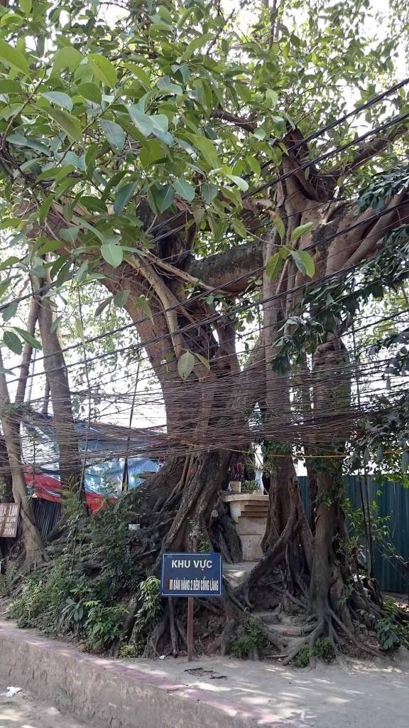 石の門をくぐるとすぐに現れる樹齢の古さを思わせる霊験あらたかな木