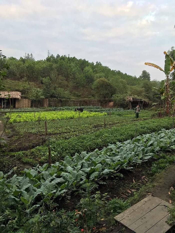 自給自足の生活を支える、新鮮な野菜畑