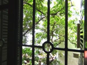 窓から見える緑の木々