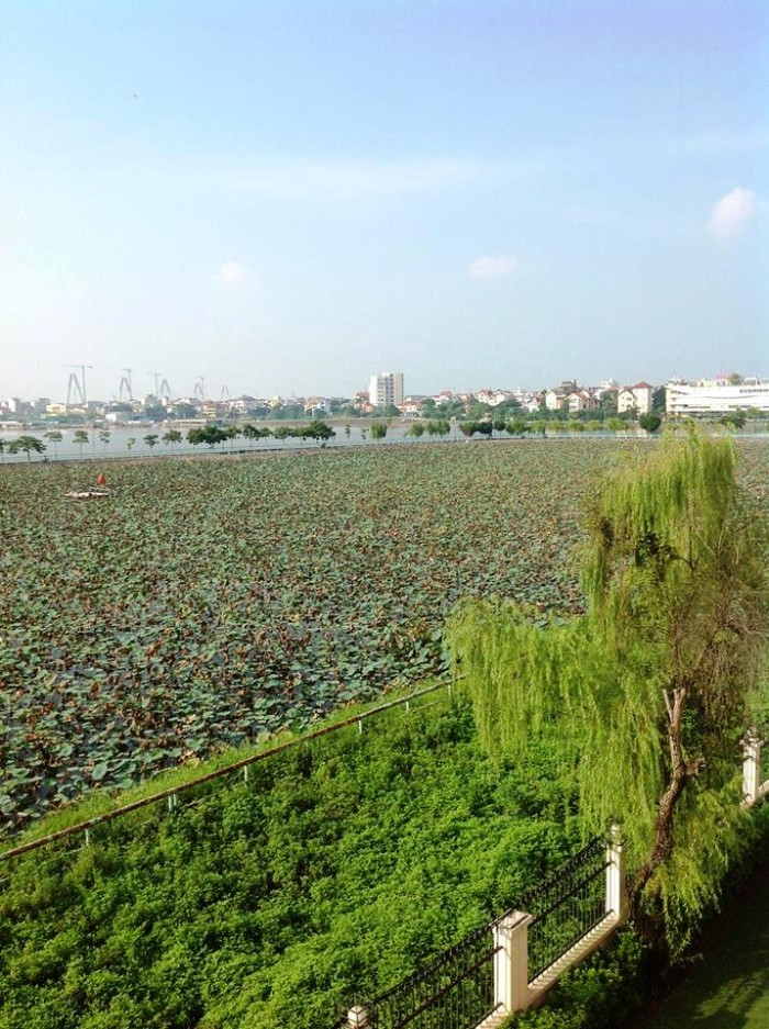 タイ湖沿岸にあるベトナム情緒溢れる「蓮池」(タイ湖東岸にあるSedona Suites)