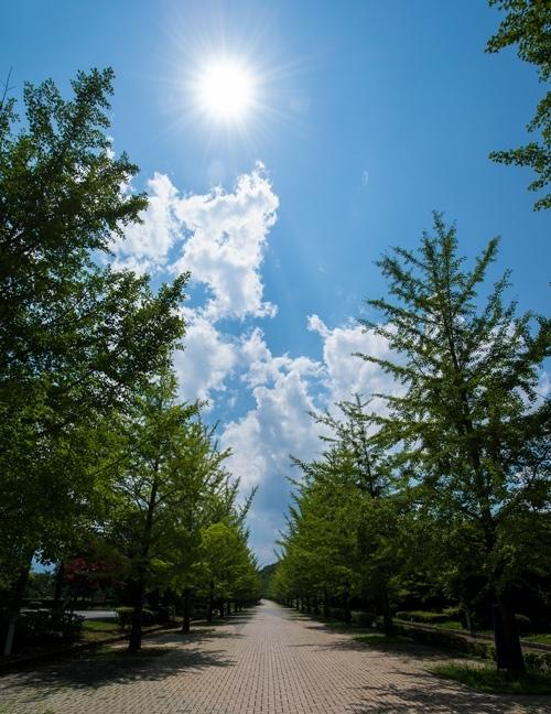 燦々と降り注ぐ太陽の光「この太陽光が目には大切だそうです」