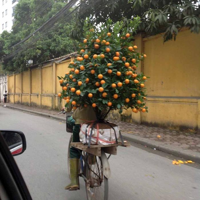 みかんの木や桃の木をバイクで運ぶ光景はこの時期ならではです