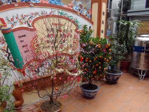 お寺の庭にはもちろんみかんの木と桃の木、これはお正月の定番です