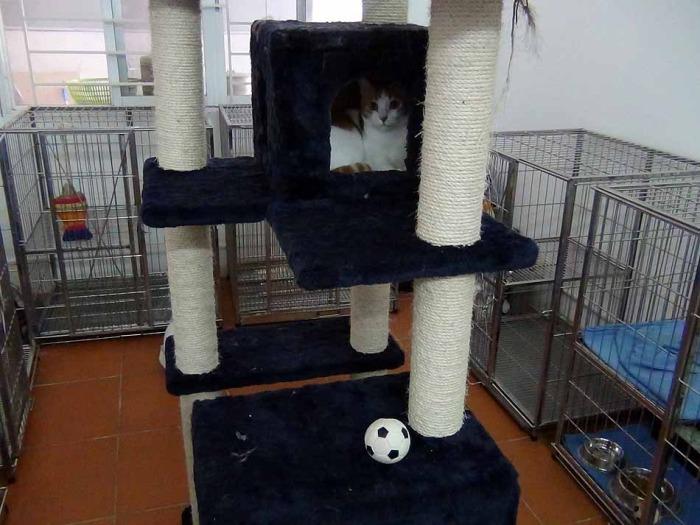 ネコの遊びスペースも用意されています