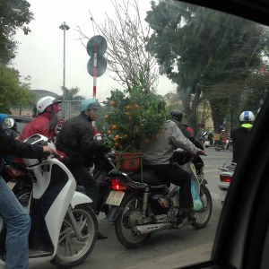 桃の木とみかんの木を載せたバイクが道のあちこちで見かけられます