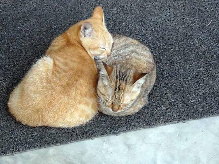 こんな仲の良いネコ、初めて見ました