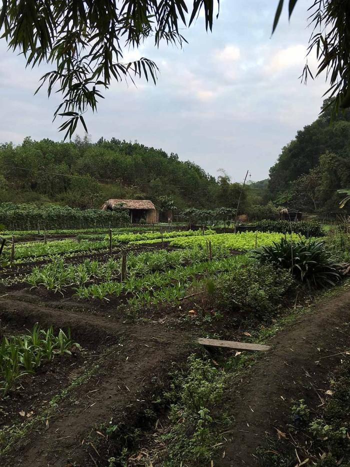 新緑に囲まれてひっそり佇む村があります