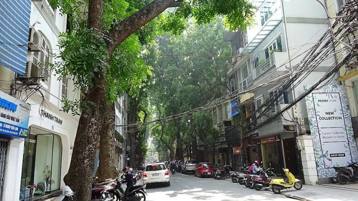 ハノイの街路樹のように青々と太く濃く羽ばたいて欲しい